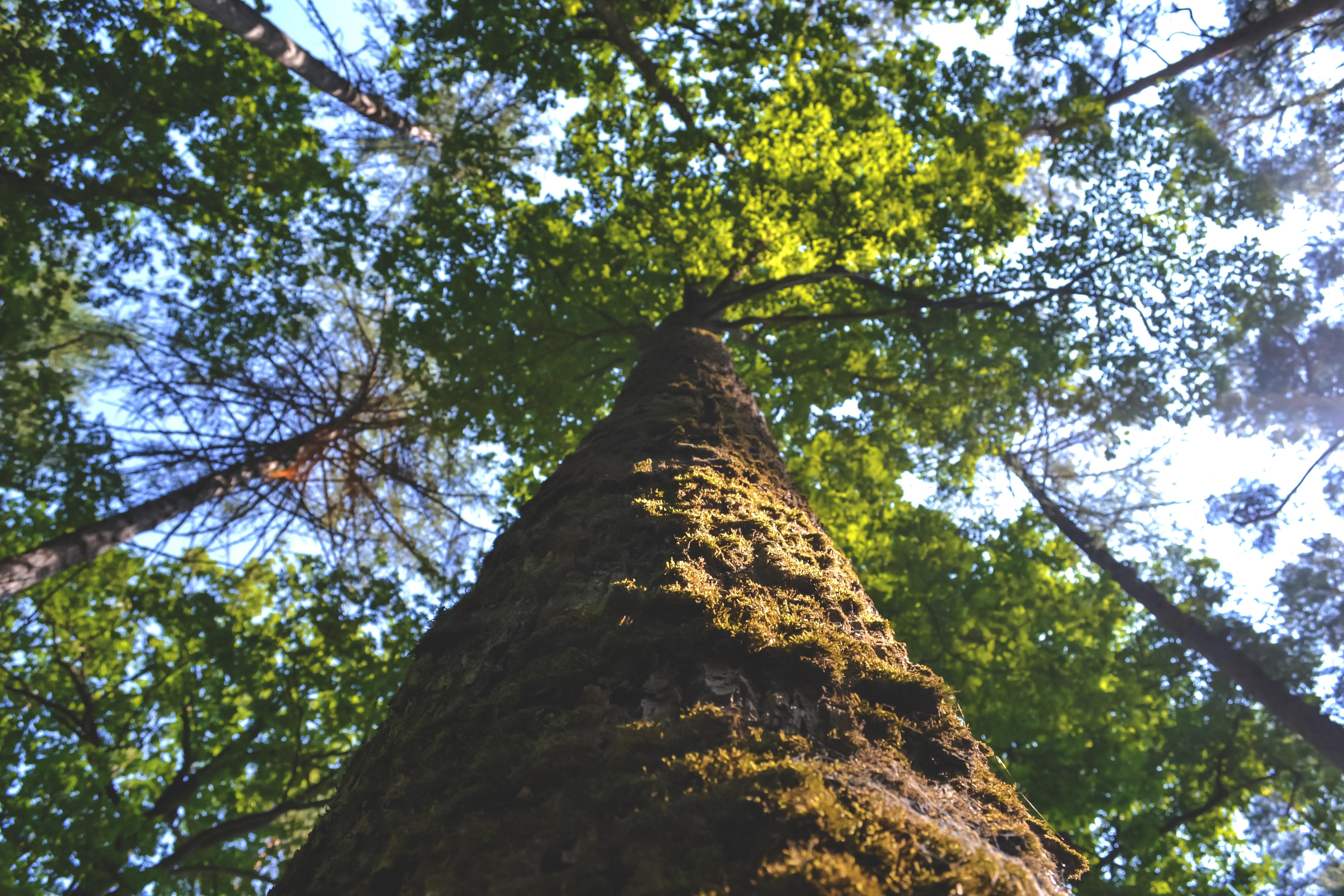 Účinky dreva